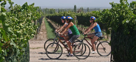 Wine-touring_on_bikes